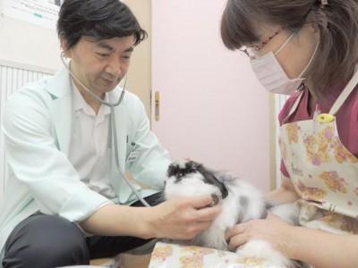 可愛動物病院